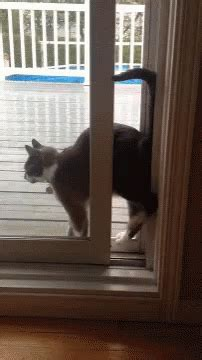 Cat Squeeze GIF - Cat Squeeze Tight - Discover & Share GIFs