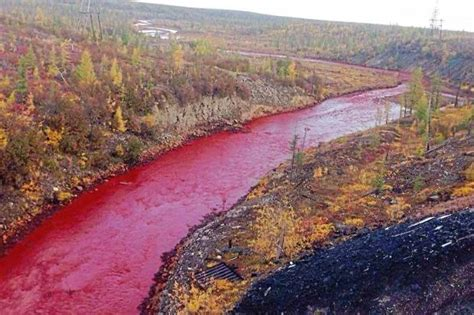 Mystery as Russian river turns red in Arctic city   London