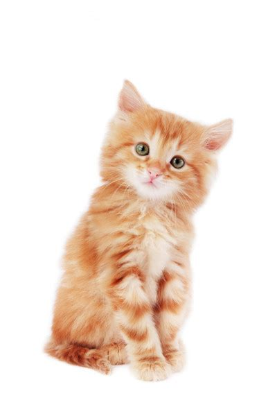 Cute kitten   Stock Images Page   Everypixel