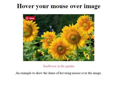 Show captions on image hover using CSS - IncludeHelp